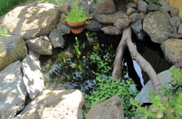 A Permaculture Garden – Brunswick East