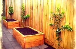 Espalier citrus fence & garden beds – Elsternwick