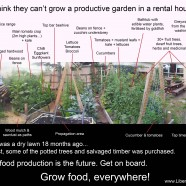 Food gardens for rental and renters